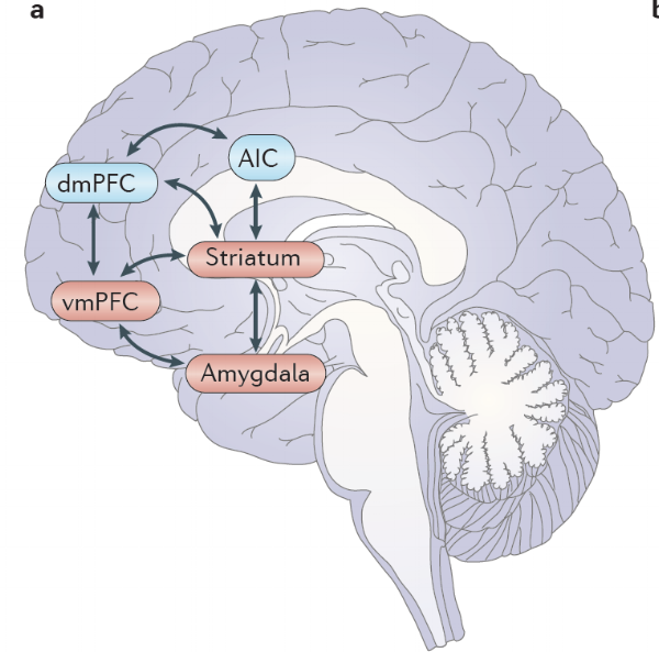 Figure from Blair (2013) showing brain regions involved in decision-making (in red)
