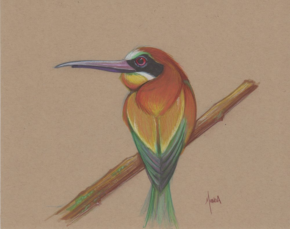 bee_eater_bird_sketch.jpeg