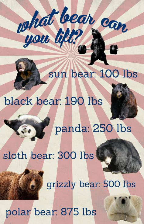 what-bear-can-you-lift