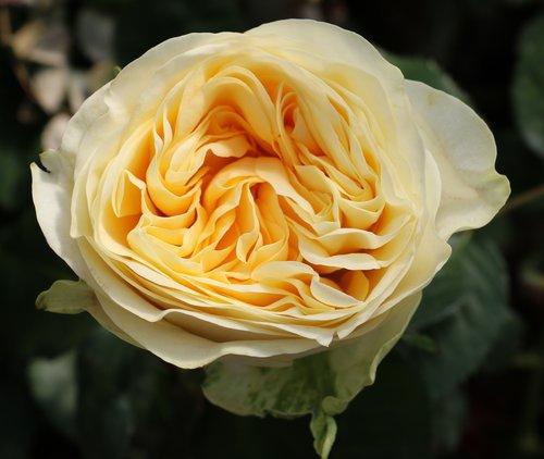 apr 18 2017 romantic garden soft yellow yellow lisa hunstad comment
