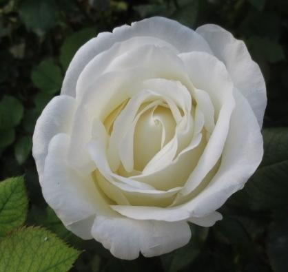mar 28 2017 romantic garden white lisa hunstad comment