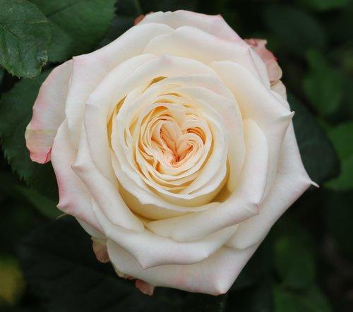 apr 18 2017 romantic garden lisa hunstad comment