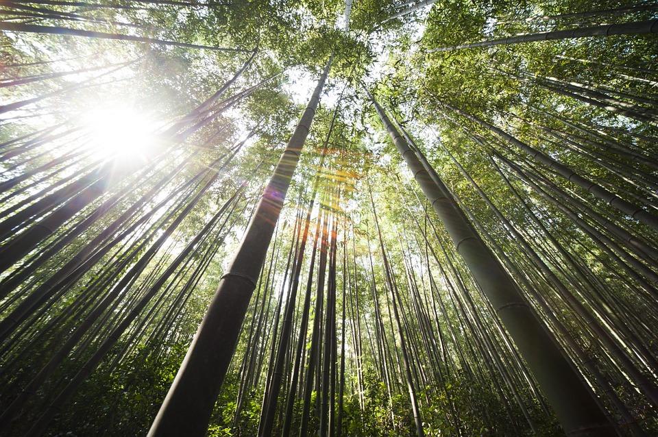 bamboo-364112_960_720.jpg