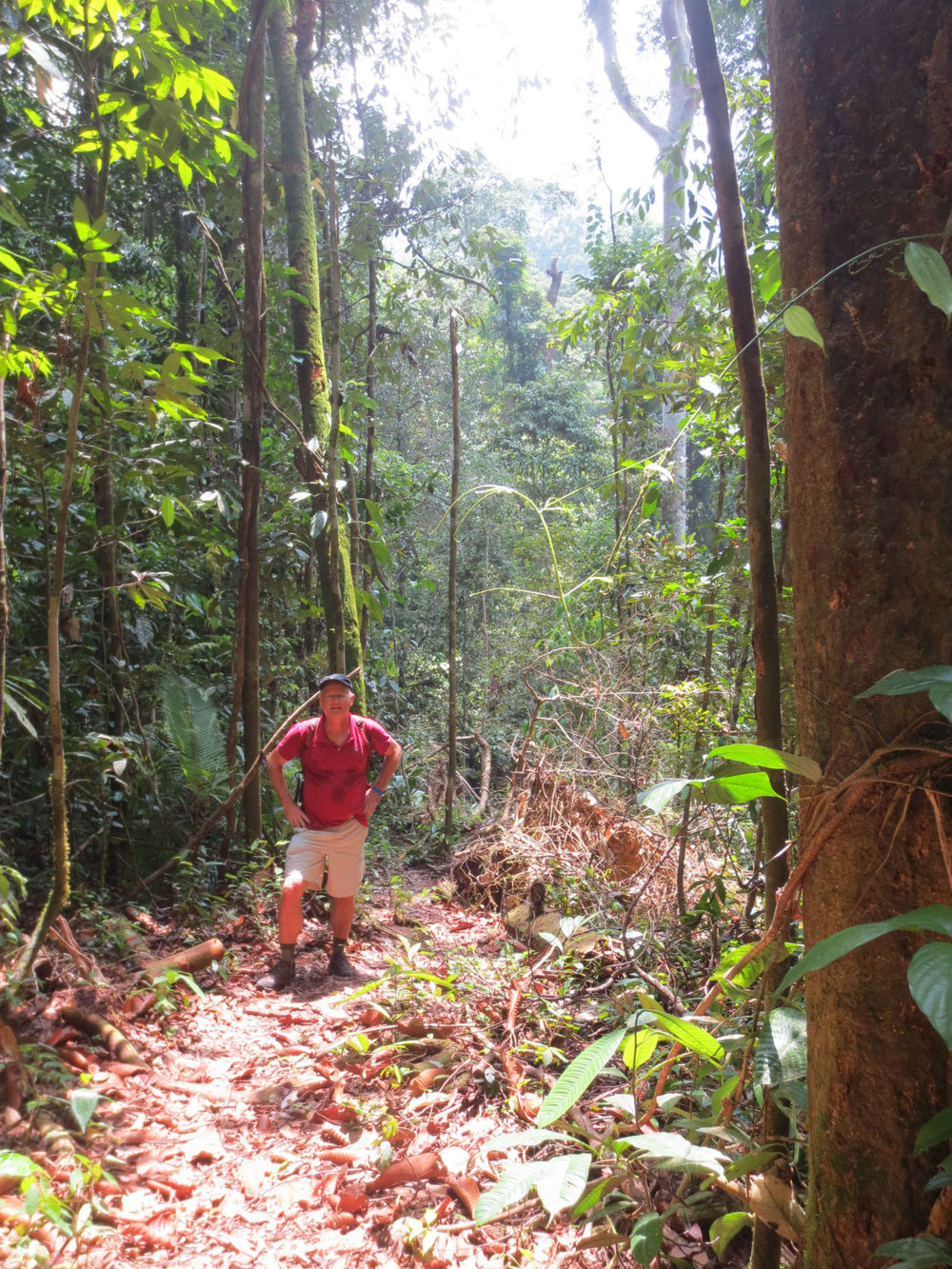 Hiking in Mulu National Park - Borneo