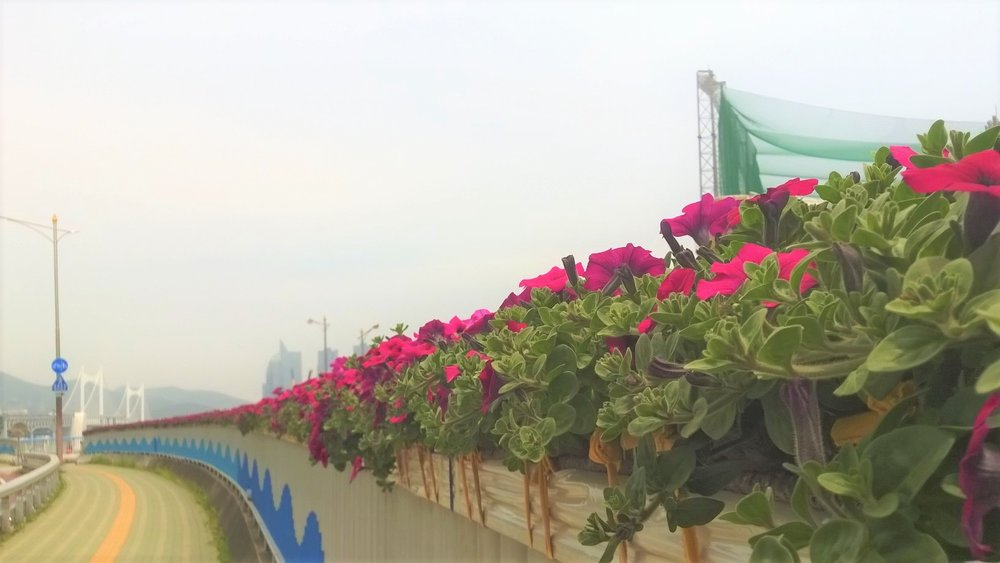 Flowers in Busan