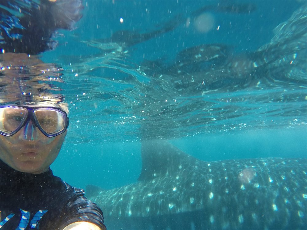 My selfie with a whale shark in its natural habitat