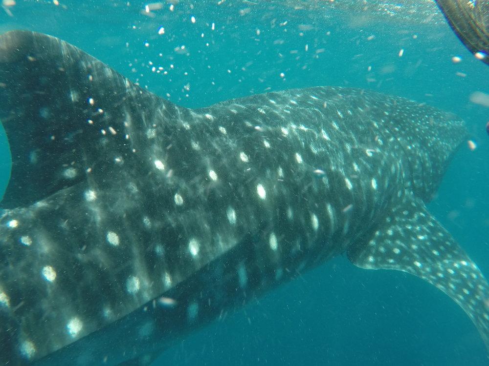 It is 8 - 10 meters long