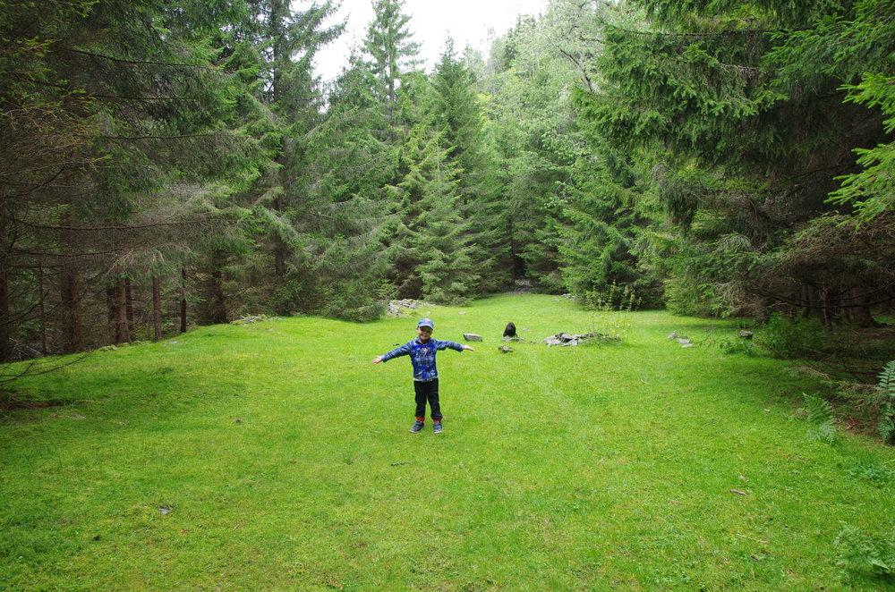 Fantastik teltplass åpner seg midt i skogen! Plass til mange telt.