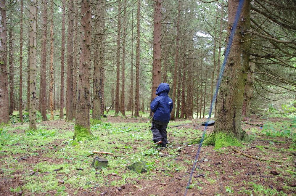 Spennende skog å utforske rundt rasteplassen.