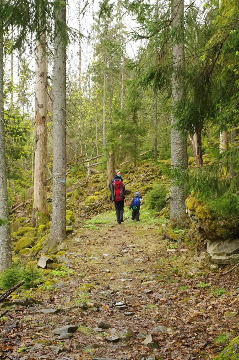 Flott skog og vei opp mot Urdselva