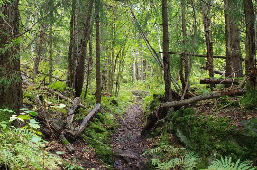 Fin gammel skog