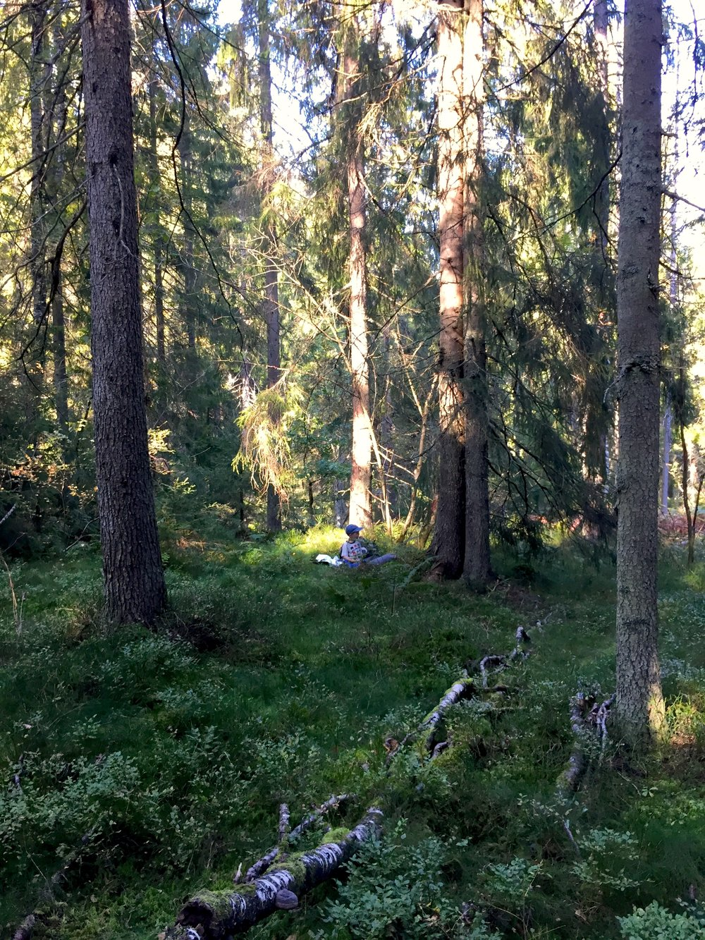 Fin skog på vei tilbake langs traktorveien