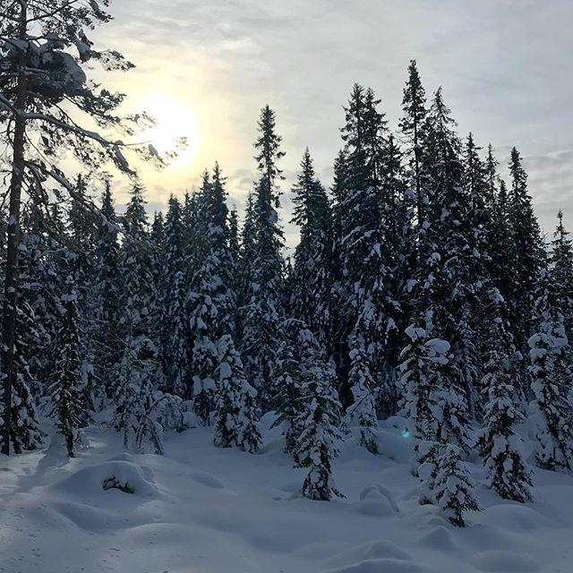 Tunge snødekte trær og metervis med snø! ❄️ håper vi får flere slike vintre fremover ☃️ #magiskemarka #markaglede #ski #markafordeminste #utno #mittlekeland #eventyrskog #urskog #barnpåtur #skogstur #marka #medbarnpåtur #lavterskel #lavterskeltur  #utebarn #friluftslivmedbarn #friluftsliv #mittnorge #tur #markafordelittstørre #fjelltur #hytteliv