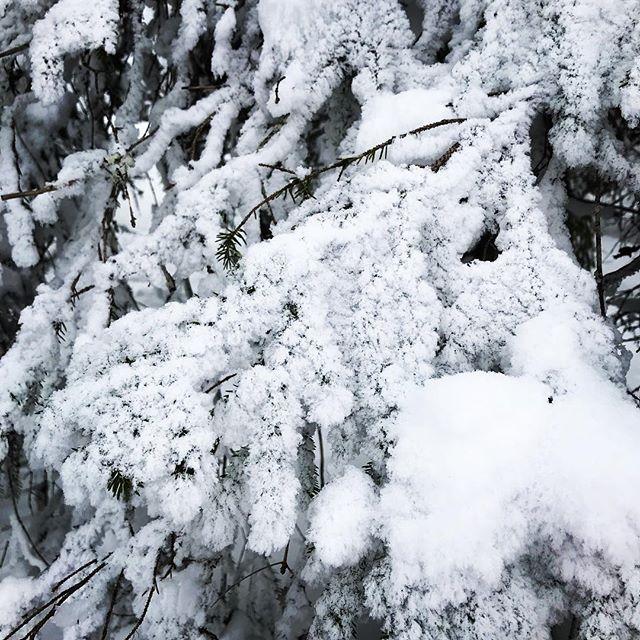 Ull på trærne 🙃❄️☃️ ❄️ #magiskemarka #markaglede #ski #markafordeminste #utno #mittlekeland #eventyrskog #urskog #barnpåtur #skogstur #marka #medbarnpåtur #lavterskel #lavterskeltur  #utebarn #friluftslivmedbarn #friluftsliv #mittnorge #tur #markafordelittstørre #fjelltur #hytteliv