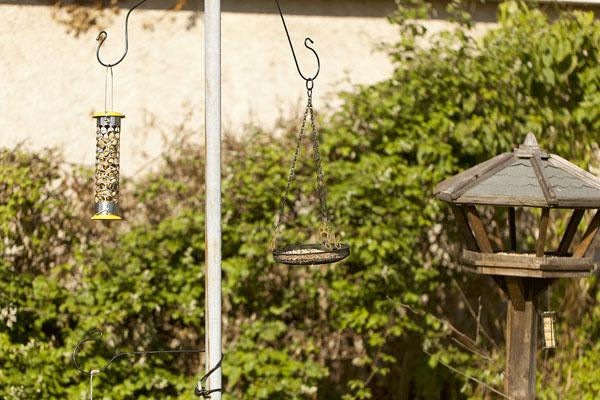 bird's feeders.jpg