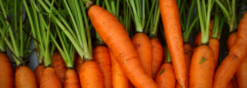 Carrot-filters-2-vignette.png