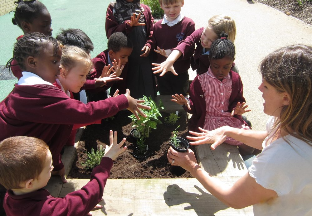 Hitherfield Primary in London learn how to plant out herbs