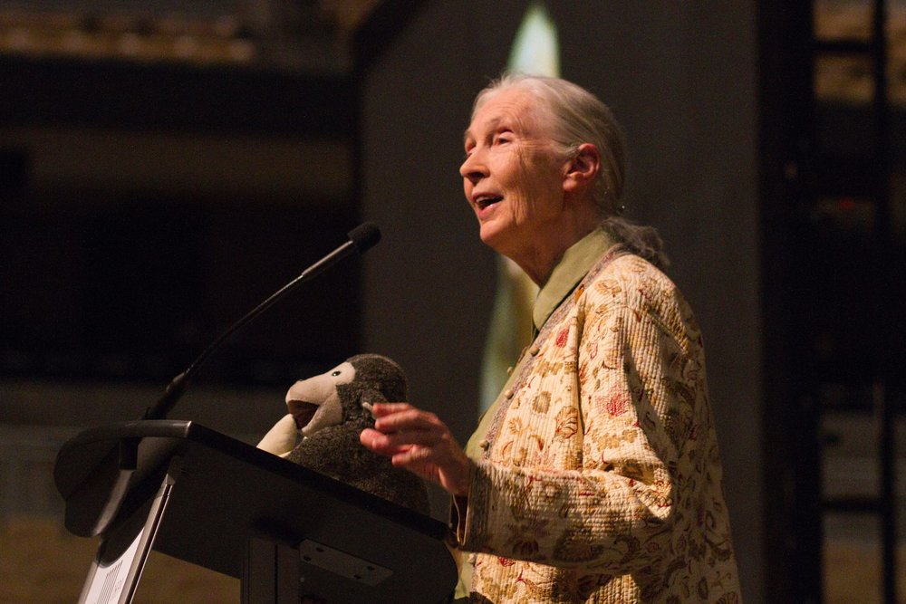 Jane Goodall lecturing in 2014.  Image credit.