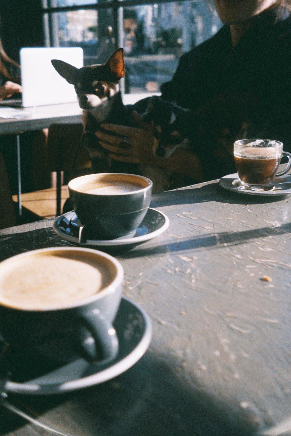 I love that in London many cafes and pubs allow dogs. We love going for a walk to the park with them and then stopping in a little cozy café for some coffee. / Adoro que em Londres muitos cafés e pubs permitam a entrada a cães. Nós adoramos ir dar uma volta a pé até ao parque com eles e depois parar num cafezinho acolhedor para tomar um café.