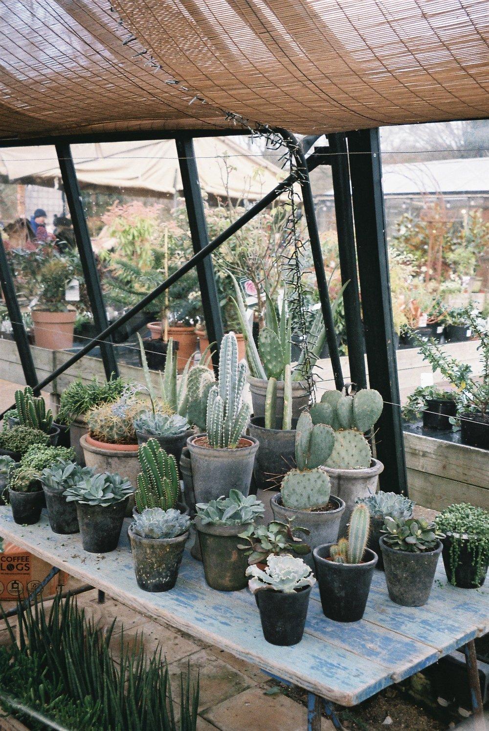 Petersham Nurseries also has an interiors shop (way overpriced in my modest opinion), and a garden centre where they sell all kinds of plants.  / A Petersham Nurseries tem também uma loja de decoração (excessivamente cara na minha modesta opinião), e uma loja de jardinagem onde vendem todo o tipo de plantas.