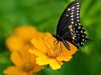 butterfly gardening.JPG