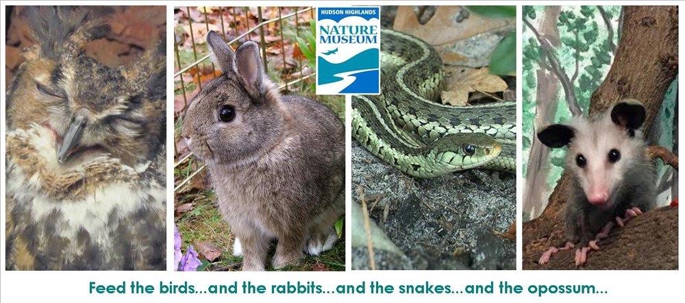 mid year WEC appeal animals.jpg