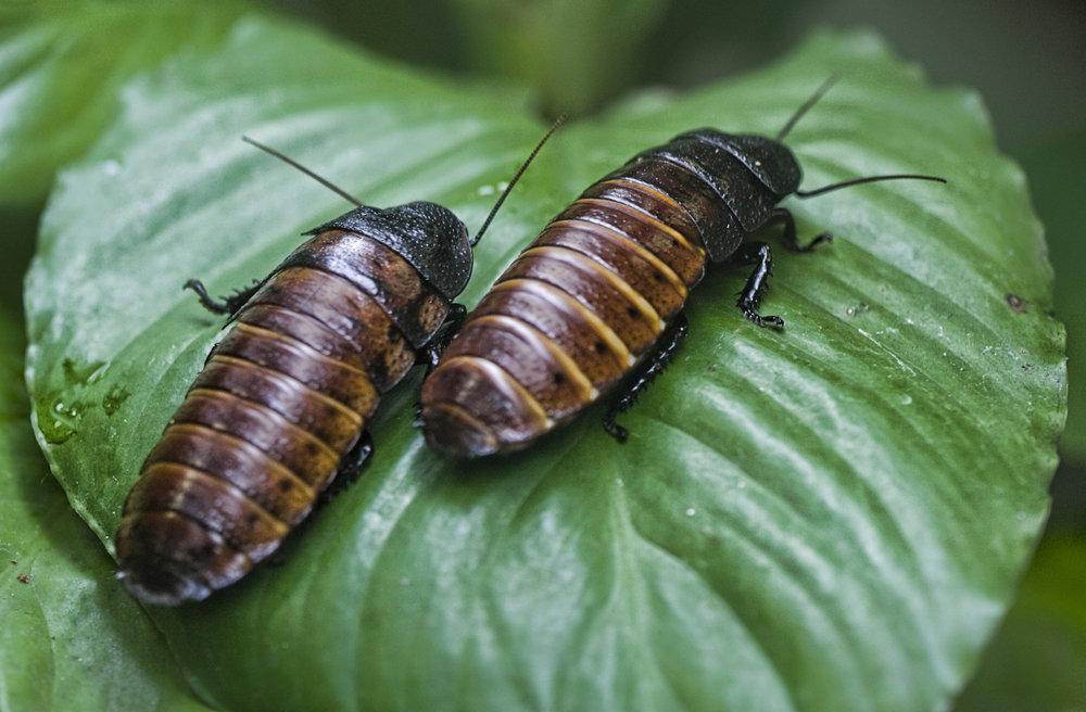 valentine cockroaches (2).jpg