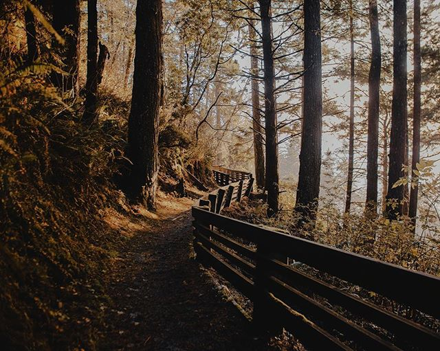 Shooting a music video in Chicago tomorrow...keep an eye on my IG story for bts 👀🎥 - and here's a pic of a beautiful trail I hiked in Oregon 🤤