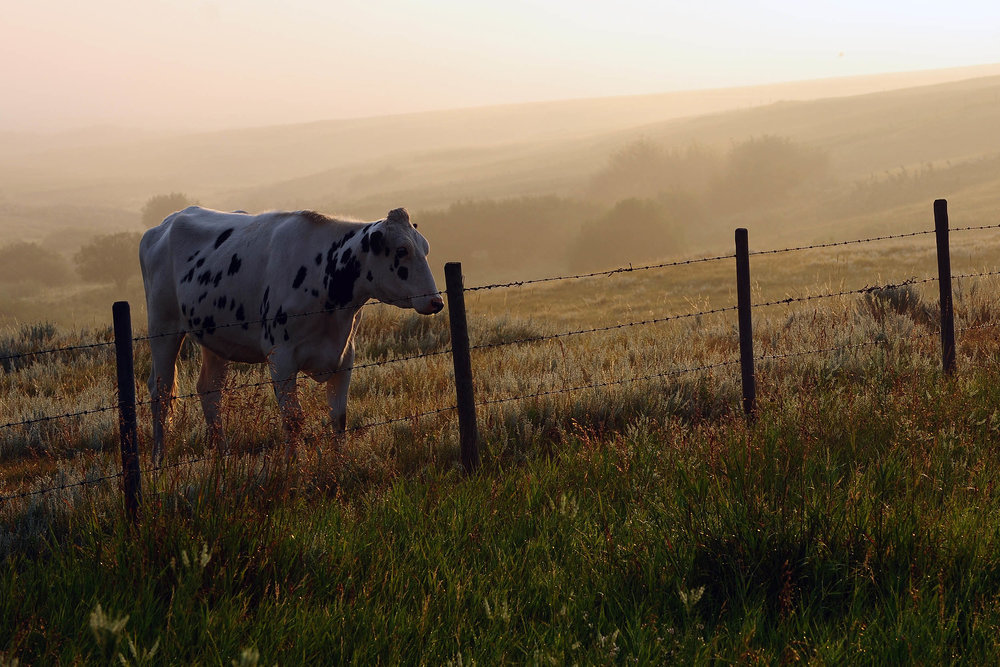 """""""Dairy Queen"""" DSC_6618"""