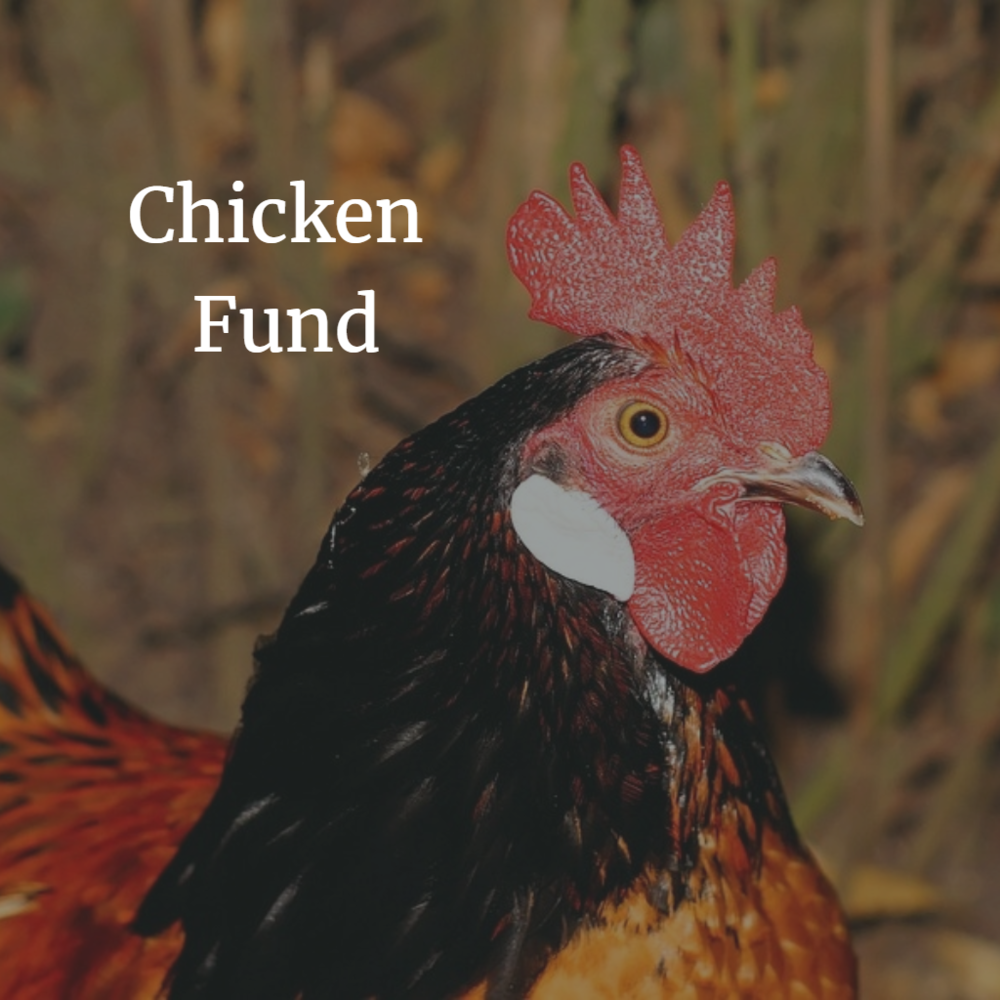 Chickens are a small gift that goes a long way significantly enhancing a families quality of life. They provide meat or can be used to farm eggs, creating economic independence. $25/chicken