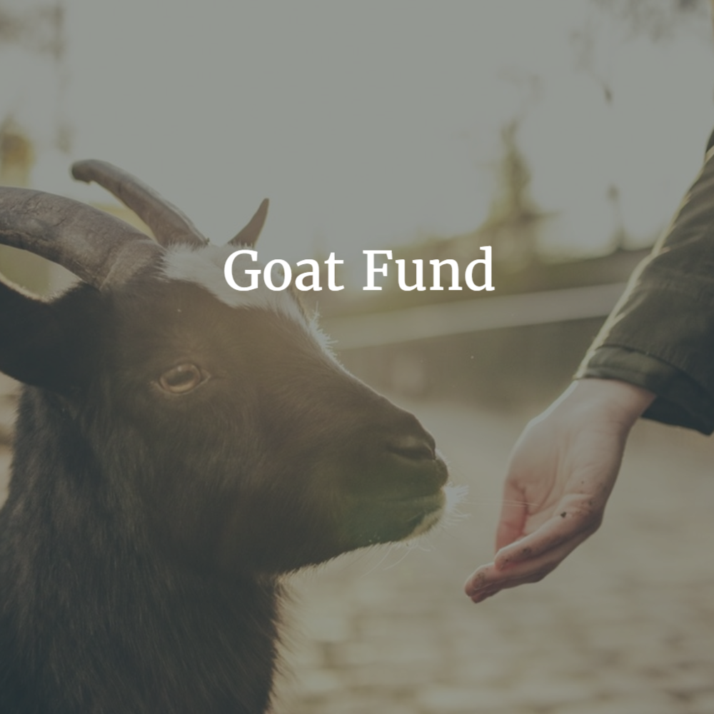 Goats require very little water and care, similar to camels, making them a great resource for Kenya. Goats provide milk, meat, and crop fertilizer for families. $65/goat