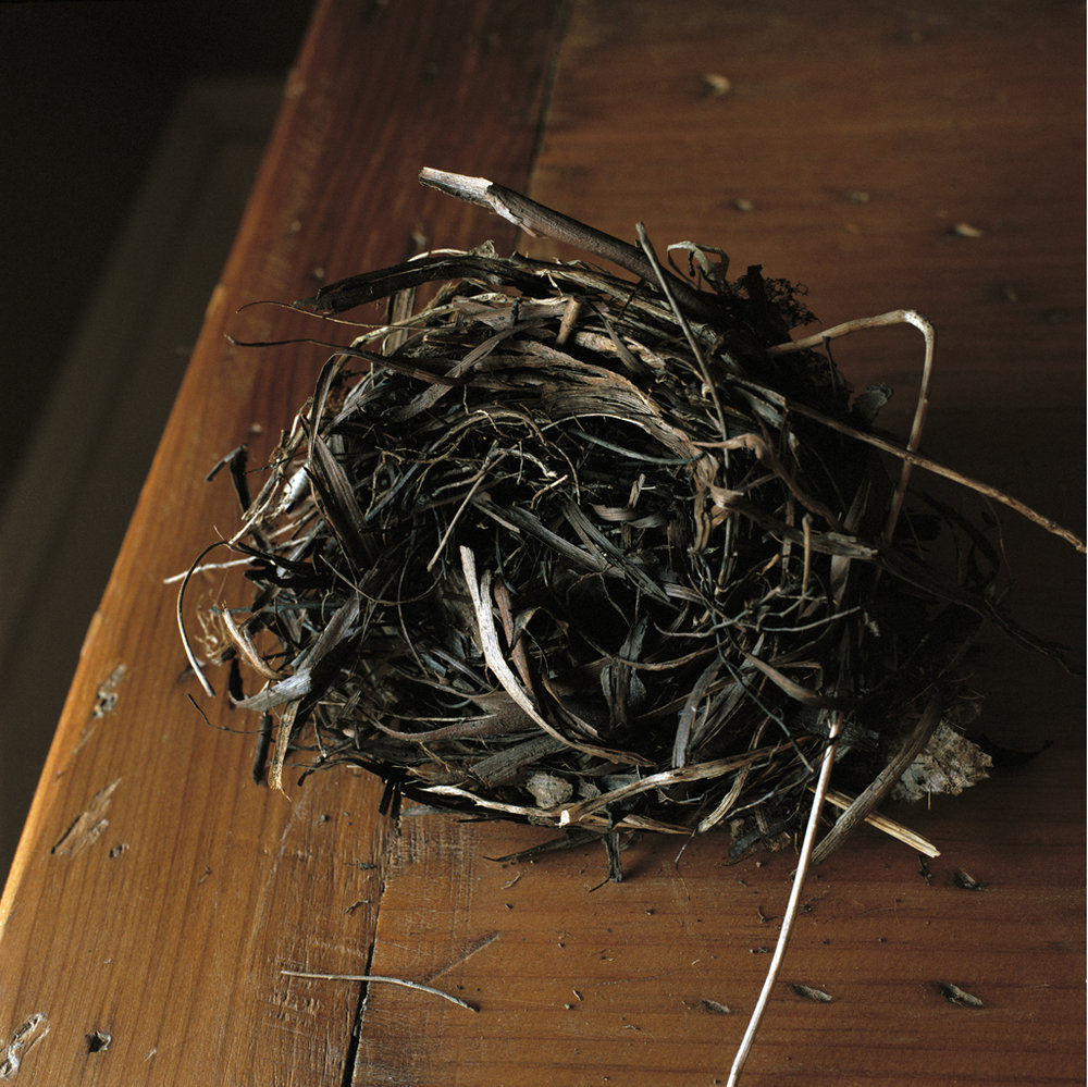 WENDY BURTON Lasher Road (from the series Nests), 2011