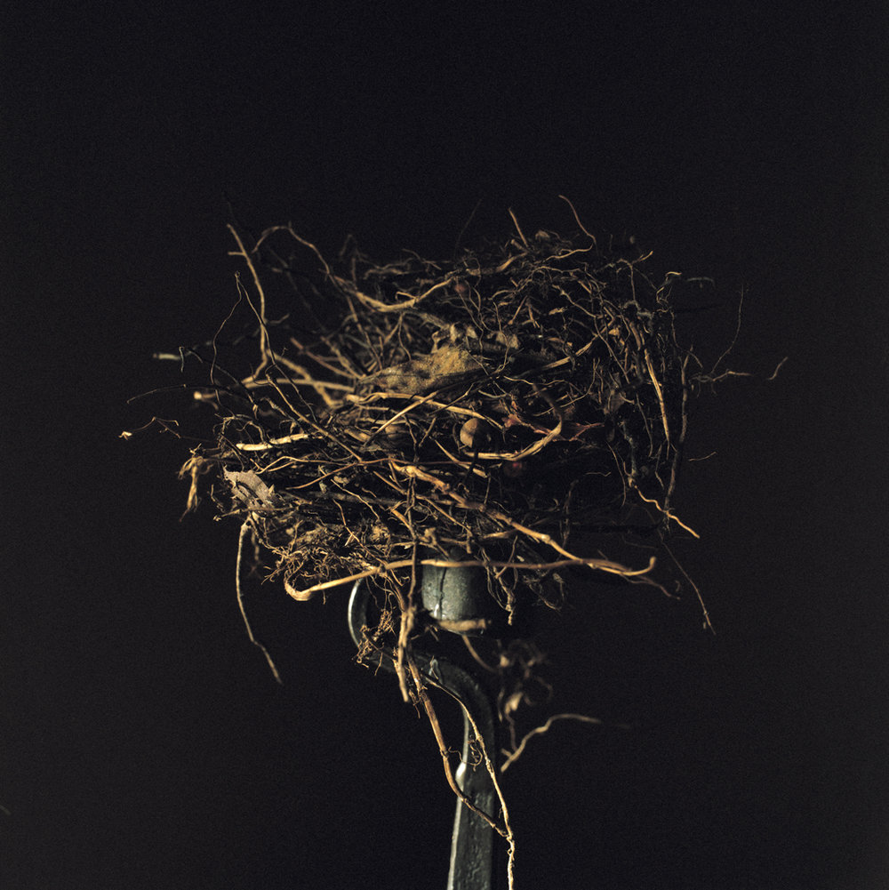 WENDY BURTON Candlestick (from the series Nests), 2011
