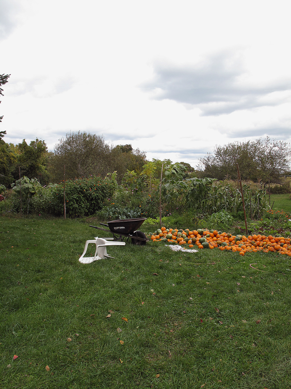 BP+P_08.HarvestedPumpkins,2010.jpg