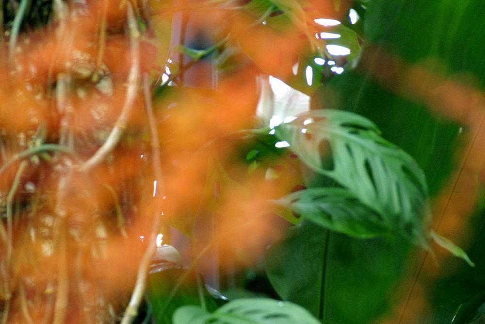 FLOWER_02.2005.jpg