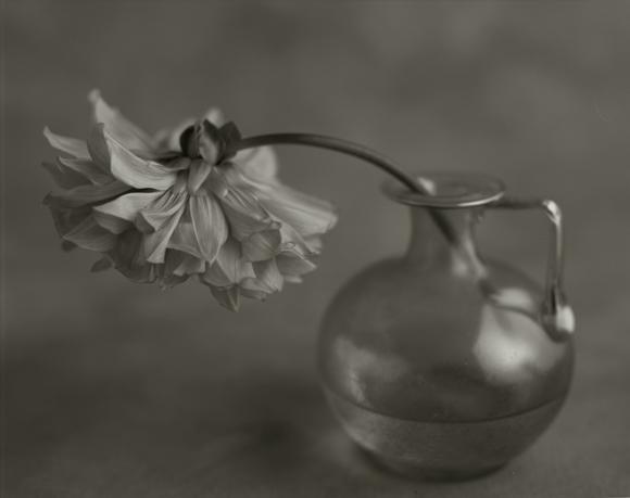 YUMIKO IZU,  Secret Garden (Noir) 1 , 2004