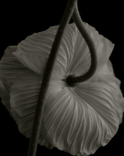 YUMIKO IZU,  Secret Garden (Noir) 6 , 2004