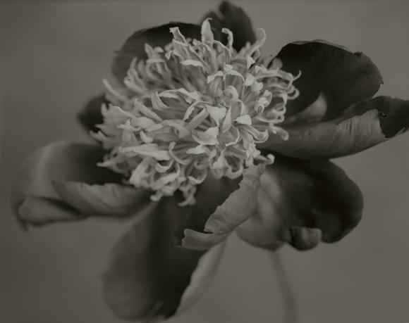 YUMIKO IZU,  Secret Garden (Noir) 36 , 2007