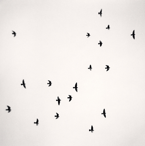 MICHAEL KENNA,  Eighteen Birds ,  Reggio Emilia, Italy,  2007