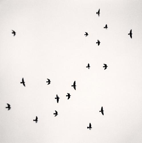 Eighteen Birds_Reggio Emilia_Italy_2007.jpg