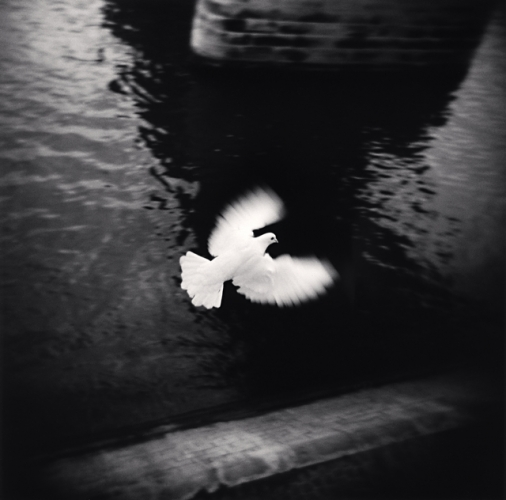 MICHAEL KENNA,  White Bird Flying , Paris, France, 2007