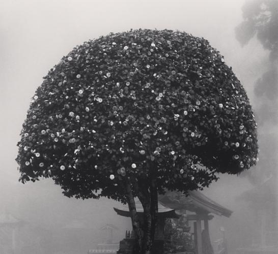 MICHAEL KENNA   Camellia Tree, Shosanji, Tokushima, Shikoku, Japan, 2010