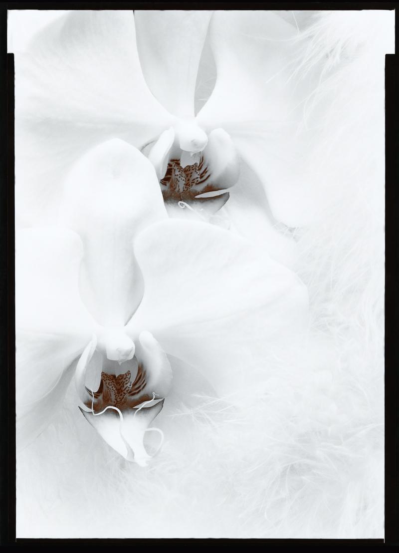 OLIVIA PARKER,  Orchids , 1976