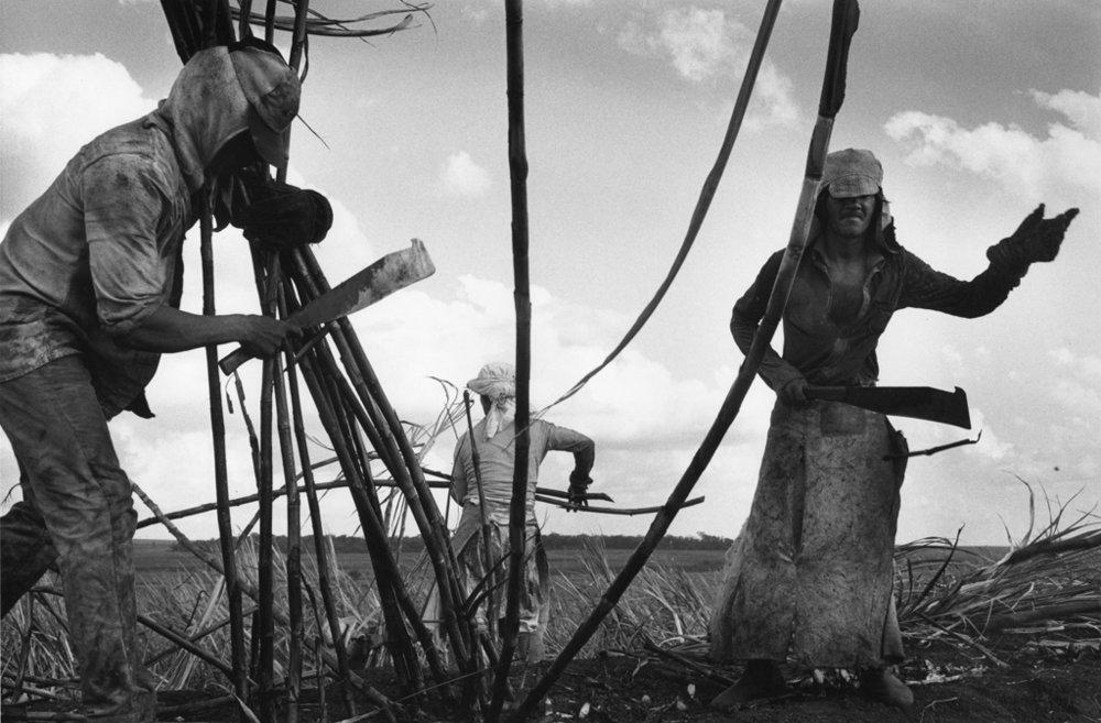 SEBASTIÃO SALGADO,  Sugarcane Plantations , 1987