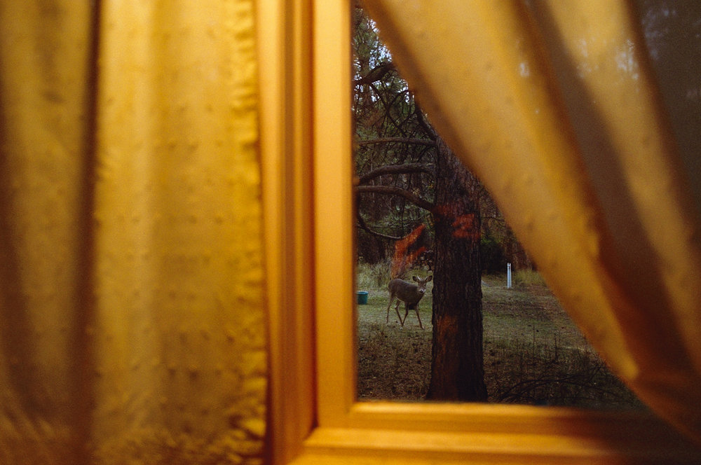 REBECCA NORRIS WEBB Kitchen Window (from the series My Dakota), 2012