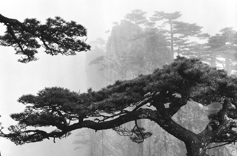 WANG WUSHENG Hearty Dragon Pines, Taken at Now-I-Believe-It-Peak, March 1975
