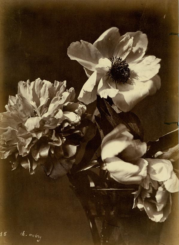 CHARLES AUBREY Flower Arrangement (#15) c. 1860's