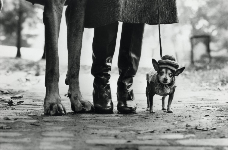 ELLIOTT ERWITT,  New York City (Dog Legs) , 1974