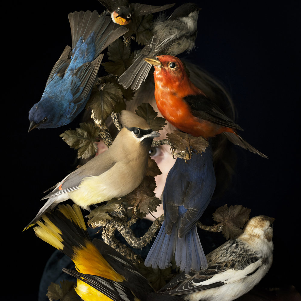 CIG HARVEY, Birds of New England, 2017