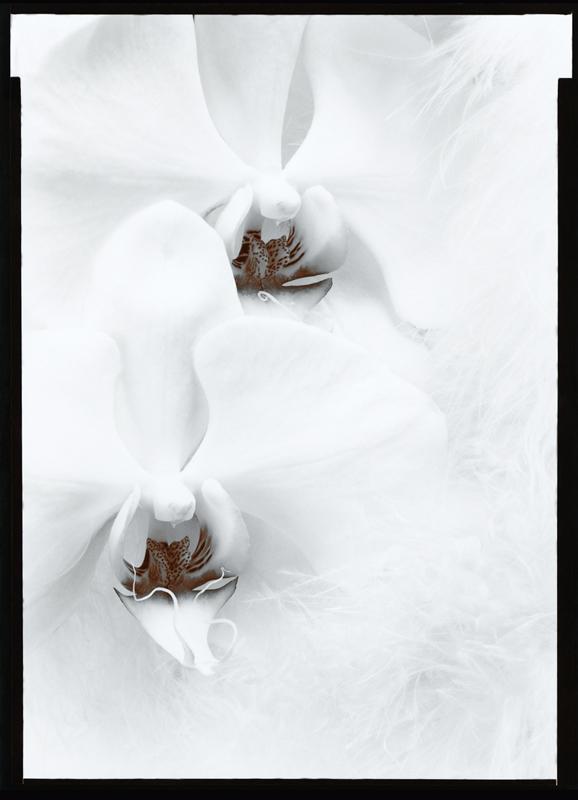 OLIVIA PARKER, Orchids, 1976
